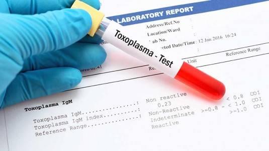 Gejala Toxoplasma dan Pencegahannya