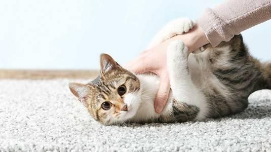 Benarkah Kucing Penyebab Mandul dan Janin Cacat?