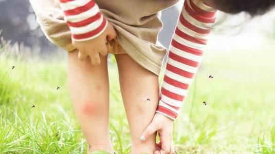 Mengapa Nyamuk Lebih Suka Menggigit Anak?