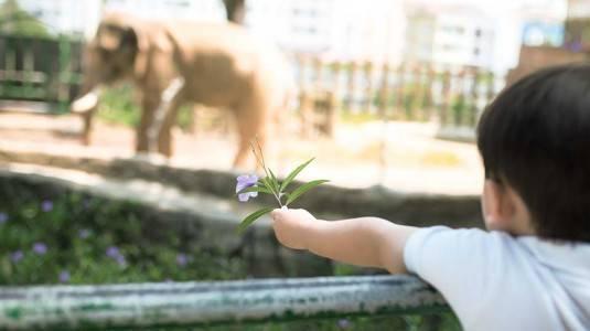 Mengajak si Kecil ke Kebun Binatang