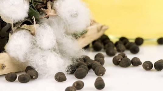 Apa sih Cottonseed Oil Itu dan Apa Khasiatnya pada Produk Skincare?