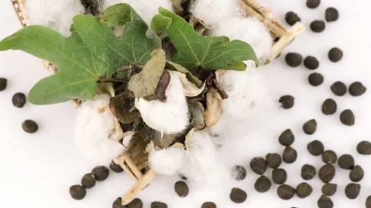 Mengapa Kandungan Cottonseed Oil pada Produk Skincare Baik bagi Kulit?