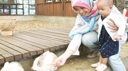 Bermain Bersama Hewan Ternak di Wisata Edukasi Kuntum Farm Field