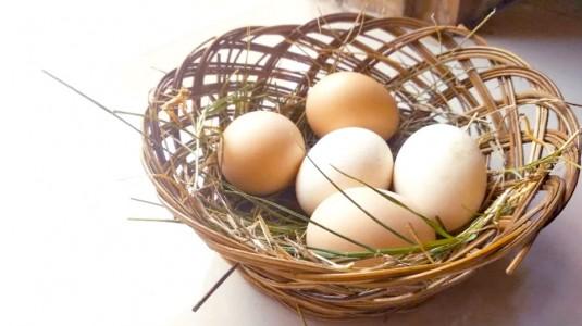 Sebutir Telur Sehari Cegah Stunting