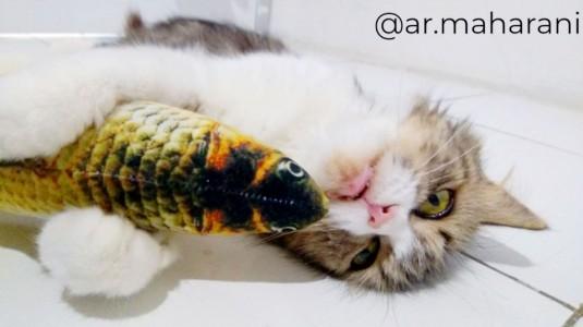 Bumil Pelihara Kucing? Aman Nggak Sih?