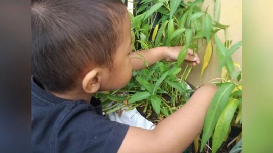 Morinaga Chil School Platinum Menemani si Kecil Belajar di Rumah