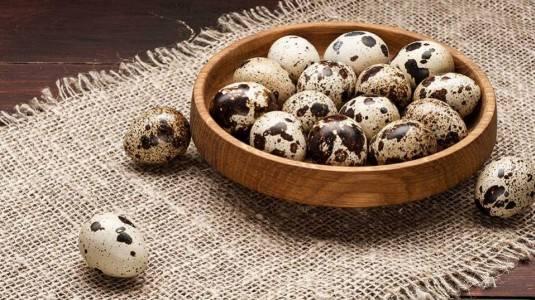 Manfaat Dan Nutrisi Telur Puyuh Untuk Si Kecil