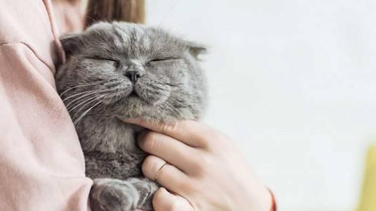 Adakah Hubungan Memelihara Kucing dengan Peluang Kehamilan Pasutri?